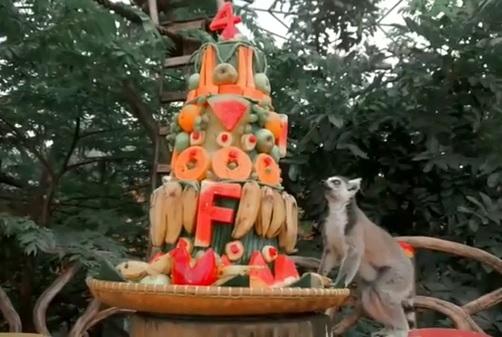 Royal Safari Garden Rayakan Ulang Tahun Dua Ekor Lemur Jantan