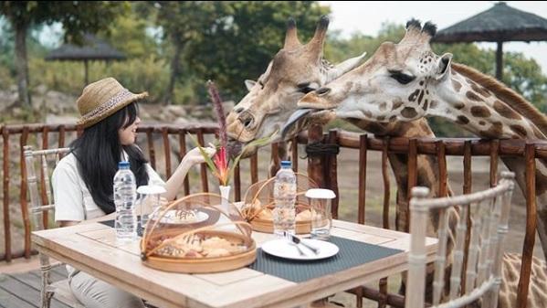 Feeding Giraffe, Kegiatan Favorit di Baobab Safari Resort