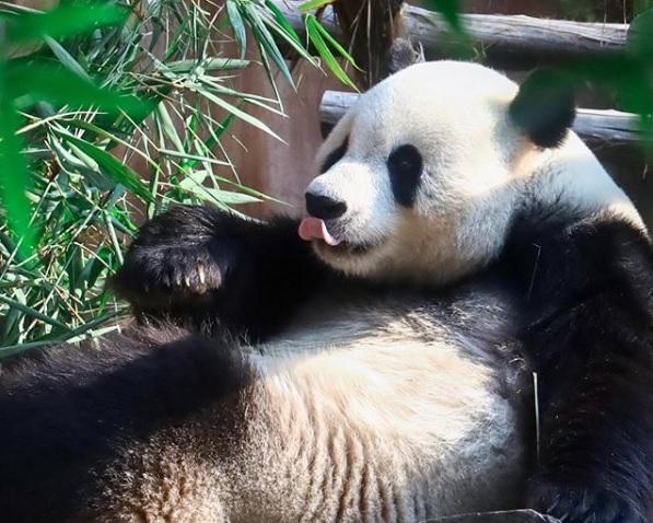Yuk, Lihat Satwa di Taman Safari Bogor Saat New Normal!