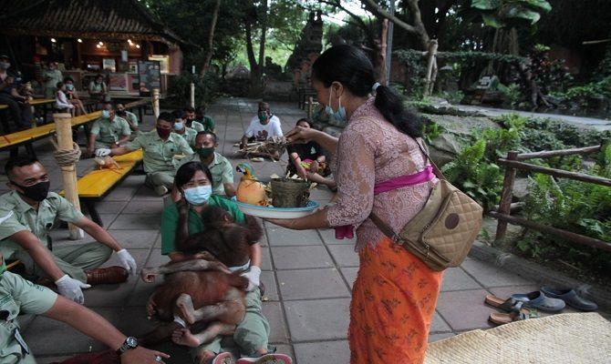 Bali Safari Park Kembali Promosikan Tradisi Bali, Tumpek Kandang