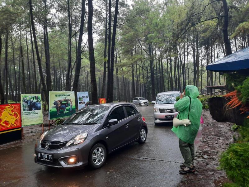 Sambut Tahun Metal Ox, Taman Safari Prigen Ajak Pengunjung Berkenalan dengan Banteng Jawa