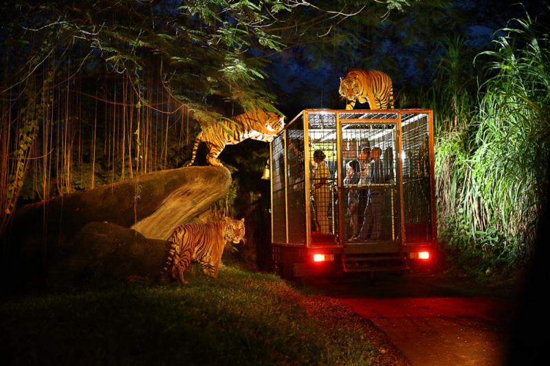 Sensasi Night Safari Hadir Kembali!