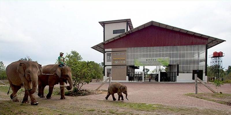 Taman Safari Indonesia Lakukan Konservasi Gajah Sumatera