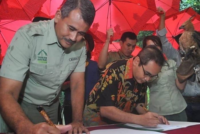 Taman Safari Indonesia Jalankan Program Konservasi Elang Jawa yang Hampir Punah