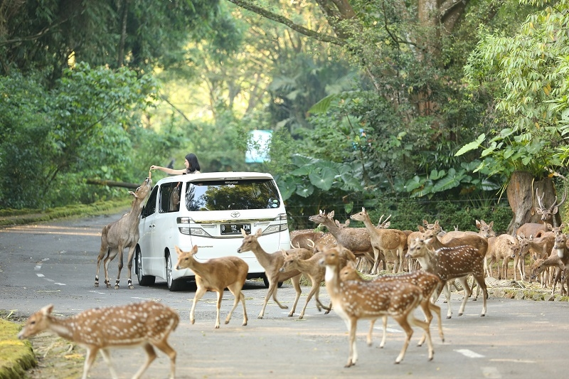 Menikmati Konservasi di Taman Safari Bogor