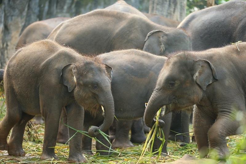 Ayo Dukung Konservasi Bersama Taman Safari Indonesia!