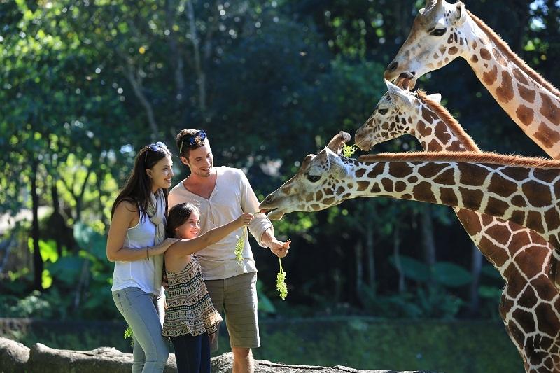Menikmati Konservasi ala Taman Safari Prigen