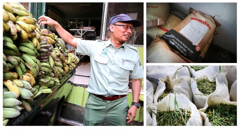 Begini Proses Pemberian Pakan Satwa di Taman Safari Bogor!