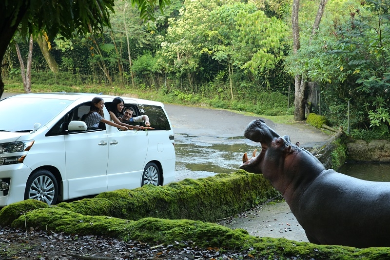 Marak Penipuan Promo Tiket Taman Safari di Medsos, Korbannya Ratusan