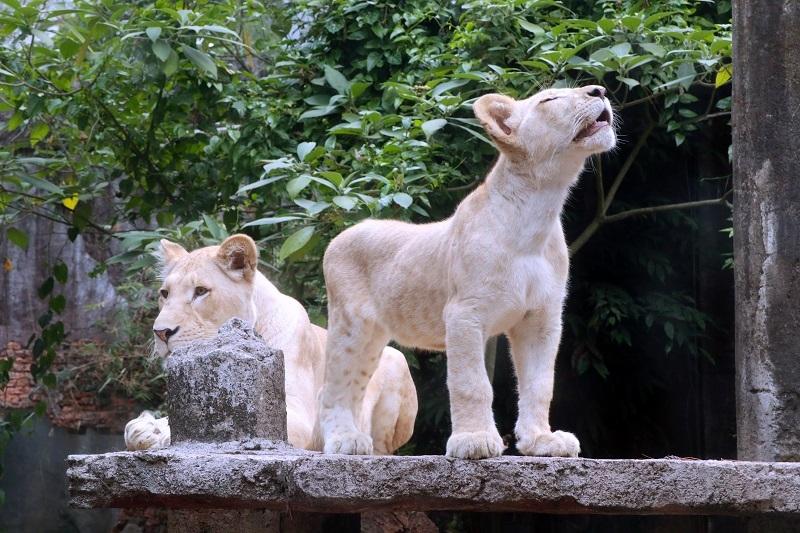 Tiket Taman Safari Bogor Dipalsukan, Ini Tips agar Wisatawan Tak Tertipu saat Membeli Online