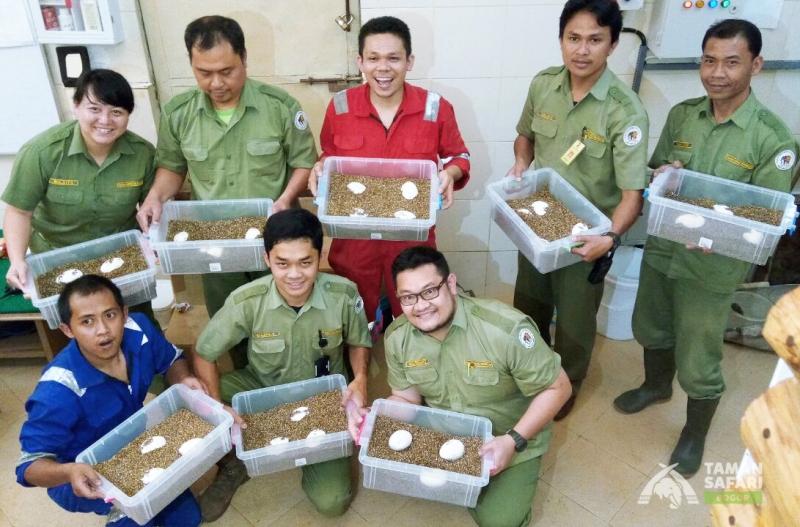 Keberhasilan Pengembangbiakan Komodo