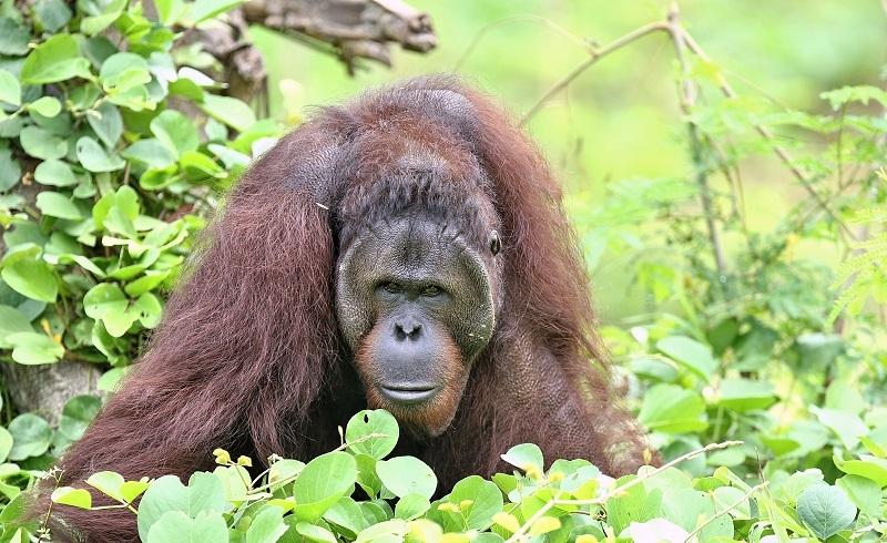 Awas! Waspadai Penipuan Promo Online Taman Safari Indonesia