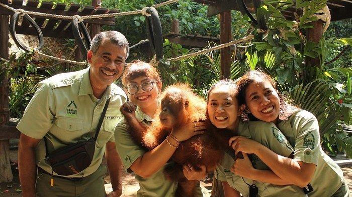 Bali Safari & Marine Park Melepaskan Kembali Bonbon, Orangutan yang Disita, ke Alam Liar