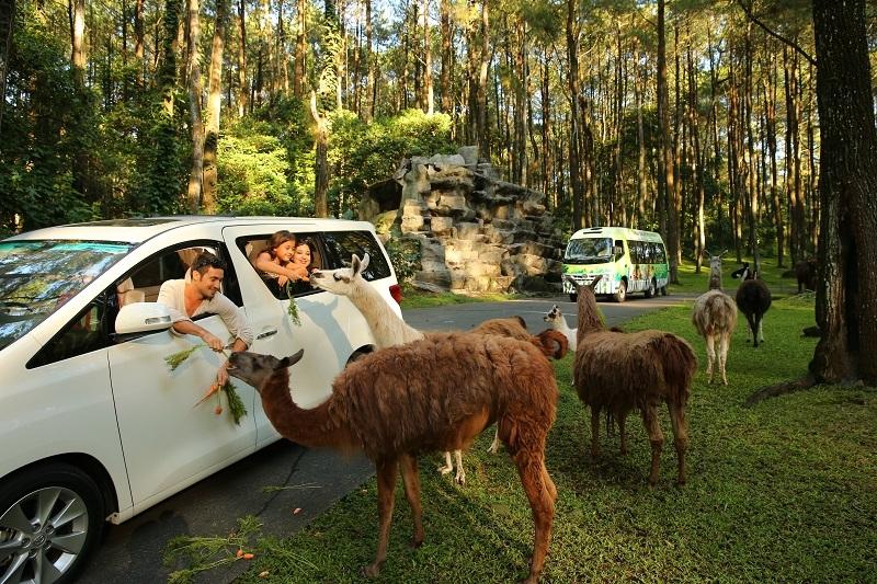 Berencana Liburan di Tahun 2020? Ke Taman Safari Indonesia Saja!